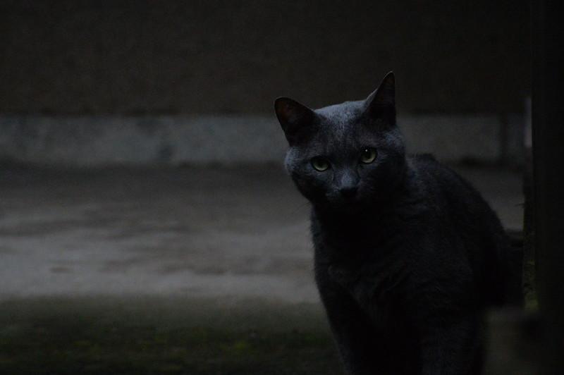48 南池袋法明寺の猫