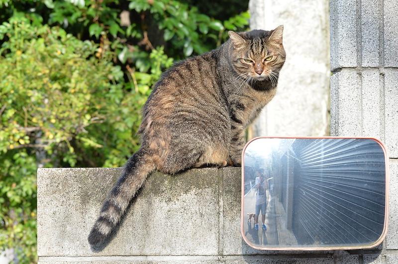 47 池袋一丁目児童遊園の猫