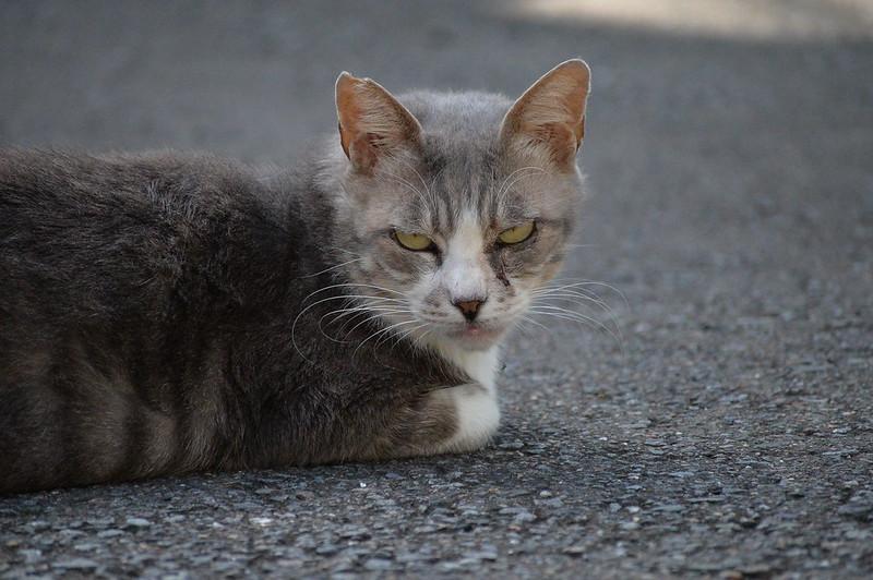 43 南池袋路地の猫