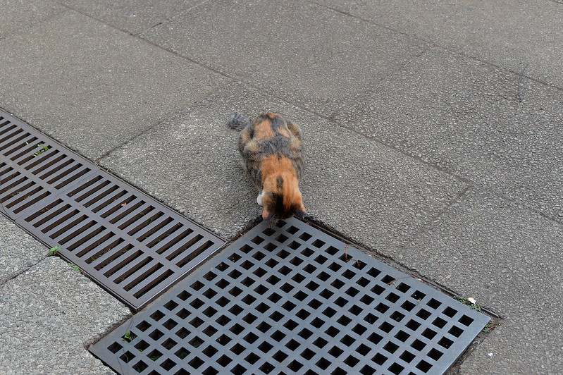 40 東池袋中央公園の猫だまり
