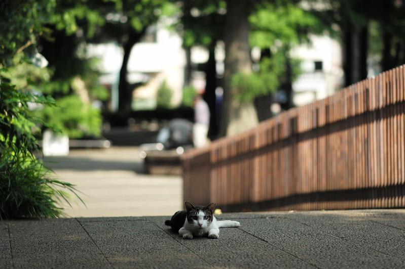 35 東池袋中央公園の猫だまり