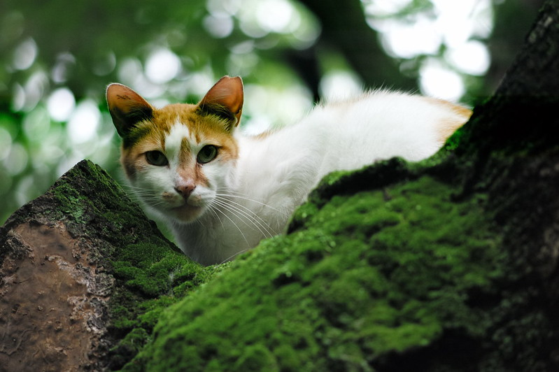 29 南池袋法明寺の猫