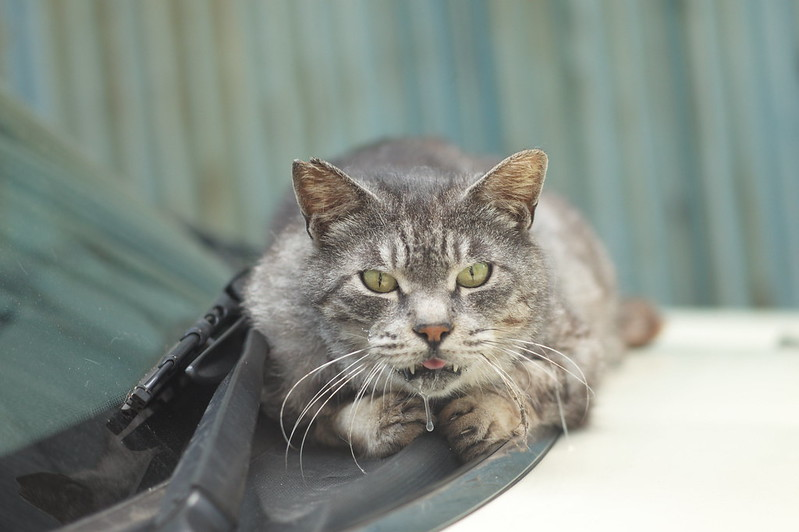 26 上池袋一丁目路地の猫