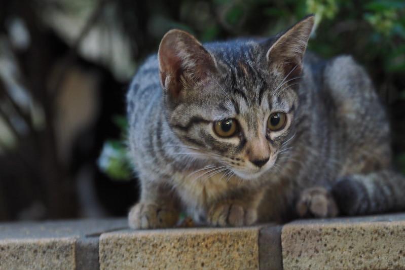 21 池袋駅前公園の猫だまり