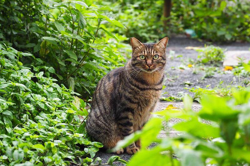 14 池袋一丁目児童遊園の猫