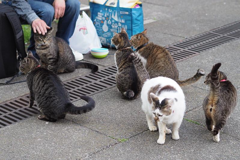 08 東池袋中央公園の猫だまり