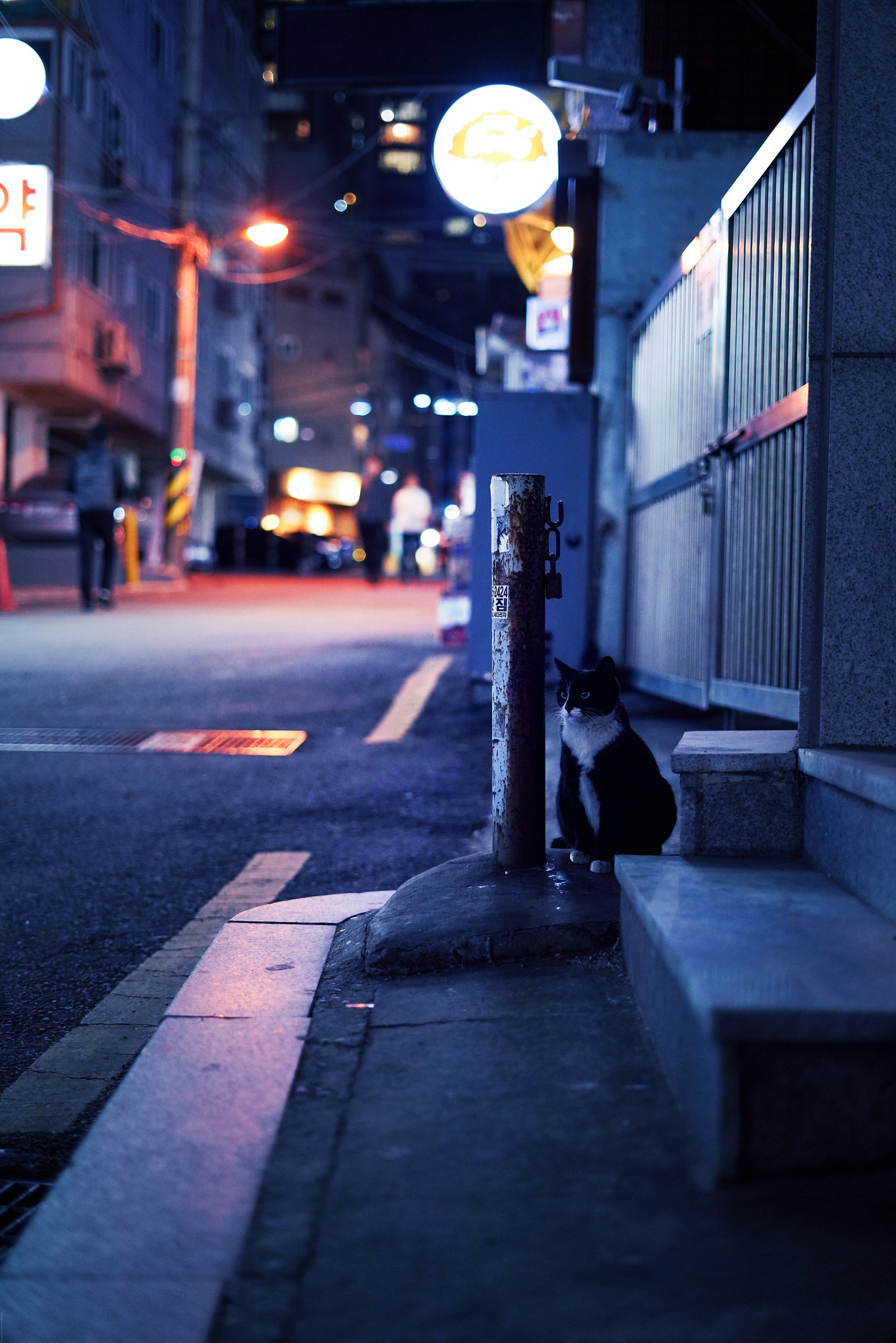 Unimpressed cat in the streets of seoul_effected