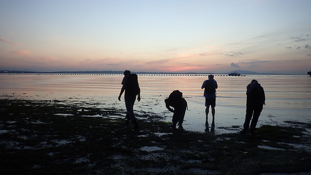 Bryozoan survey, Changi
