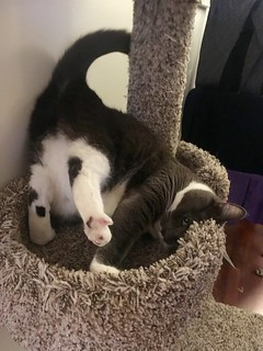Upside down Crick on the cat tree