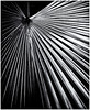 Pentax Auto 110 (1978) by Black and White Fine Art