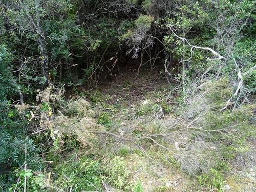 Le chemin de Luviu : la suite prochaine après le 2ème plateau herbeux