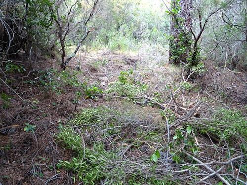 Le chemin de Luviu : arrivée au deuxième plateau herbeux (non nettoyé)