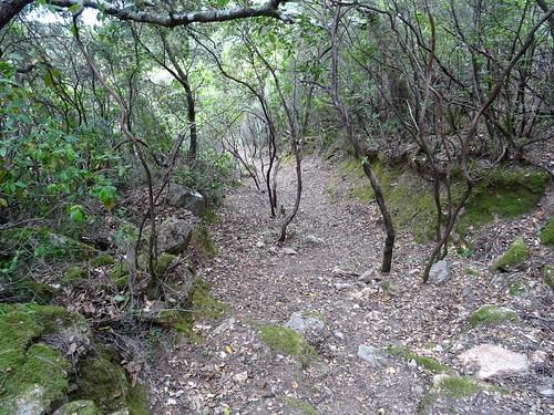 Le chemin de Luviu après démaquisage et nettoyage : remarquez comme il est creusé !