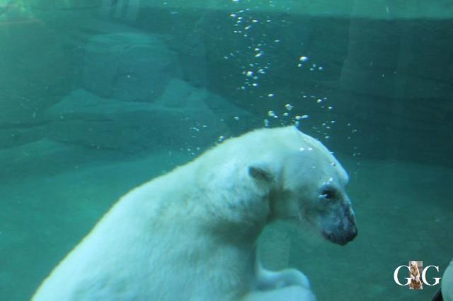 Besuch Zoo Rostock 22.+23.04.2019176