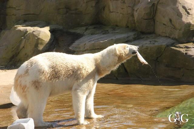 Besuch Zoo Rostock 22.+23.04.201988