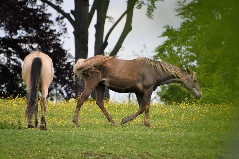 Horses 12.05 (2)