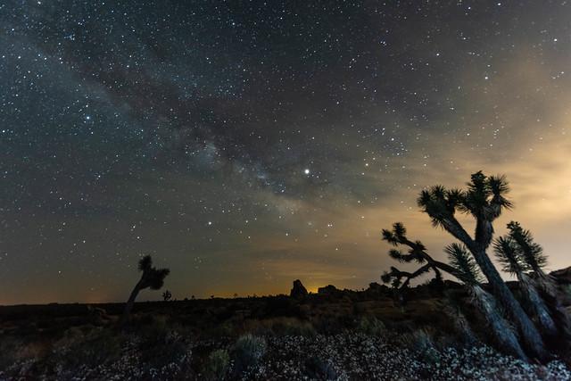 Wildflowers Superbloom, Joshua Trees, and the Milky Way