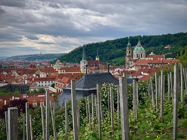 Prague through the vineyard