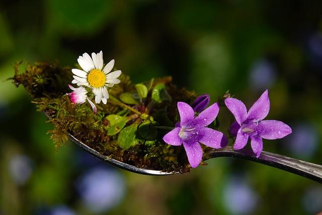 Macro Mondays - A Spoonful of garden colors HMM
