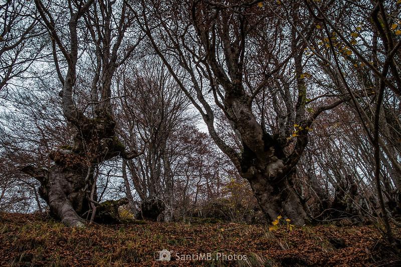 Bosque Encantado de Carlac