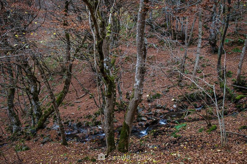 Arriu des Lauadors en el Bosc de Carlac