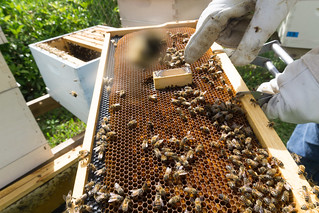 Airbnb Experience in Florida: Bee Adventure Workshop with Healthier to Go in Southwest Ranches, Fla., May 1, 2019 | by JenniferHuber