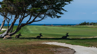 Stag day on course at Monterey Peninsula