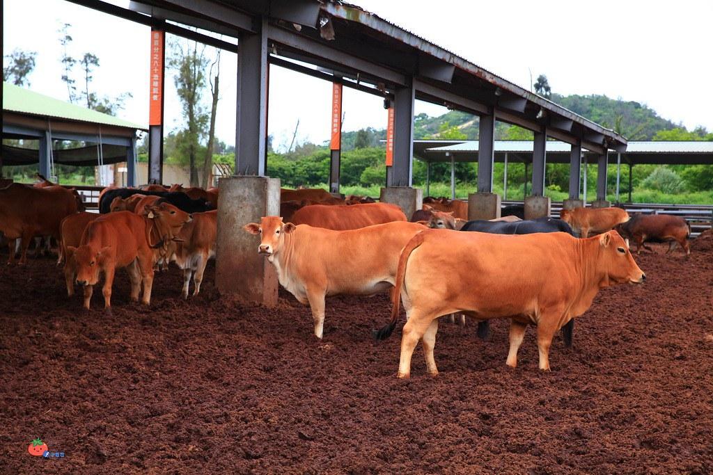 金門必吃,金門溫體牛肉麵,良金牧場