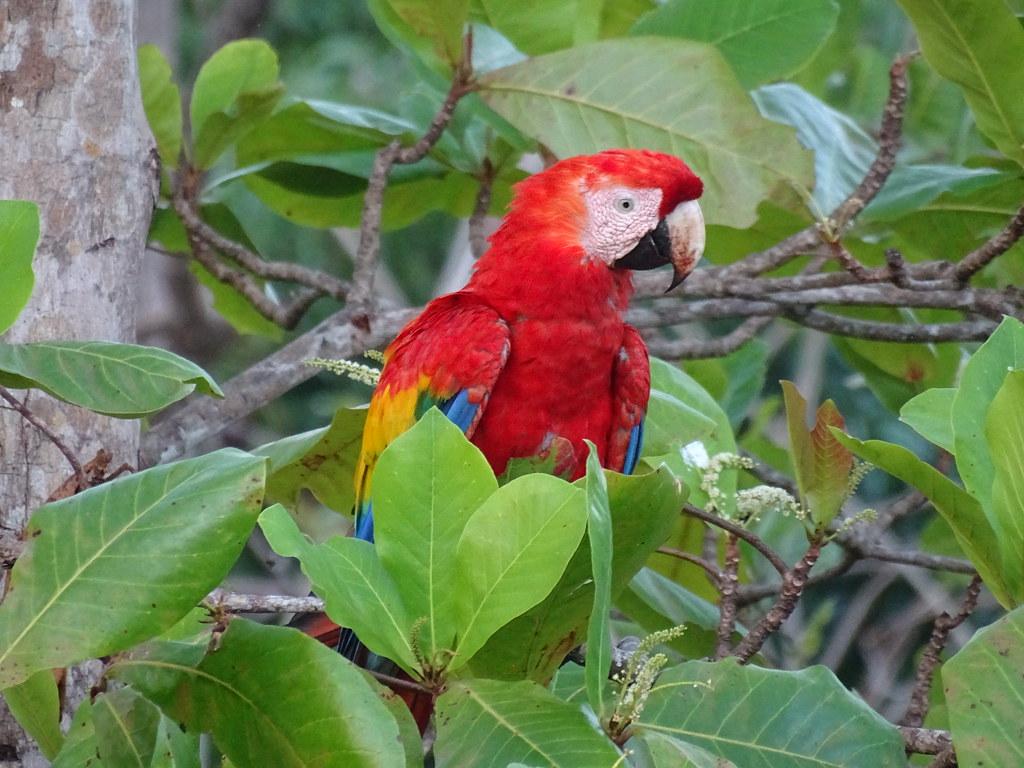 Costa Rica '19