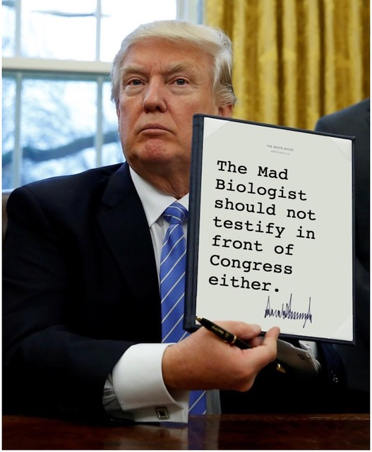 Trump_testify