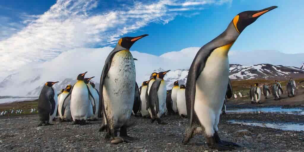 Les crottes permettent à la vie de prospérer dans l'Antarctique