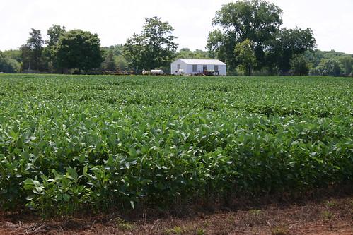A farm field