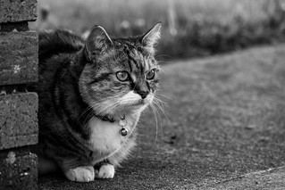 Cautious Kitty | by Cagey75