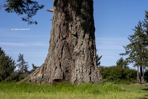 Tree 8840