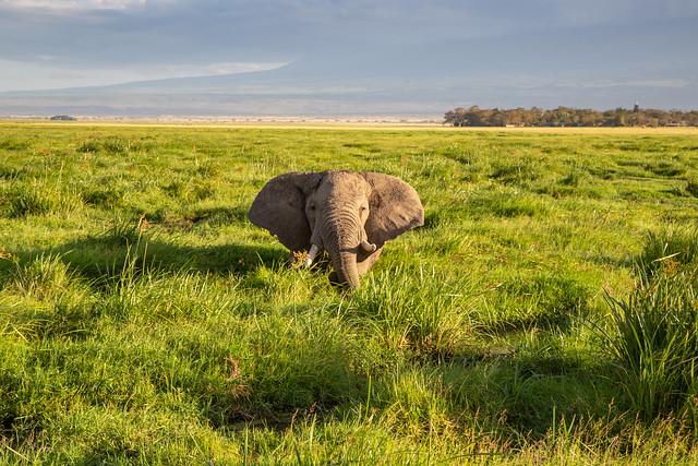 A Very Happy Elephant