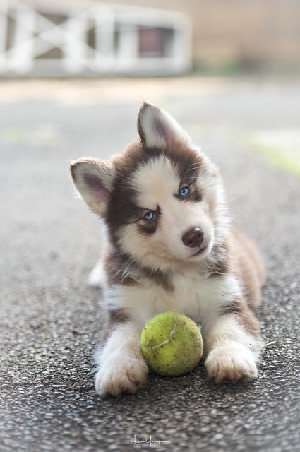 Denali Tennis Ball 01