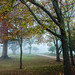 Autumn in Wynberg Park