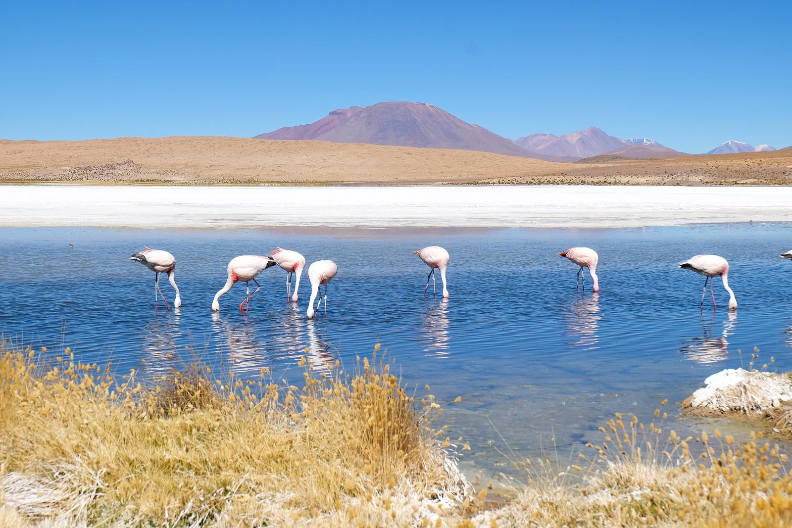 Laguna, Bolivian Altiplano