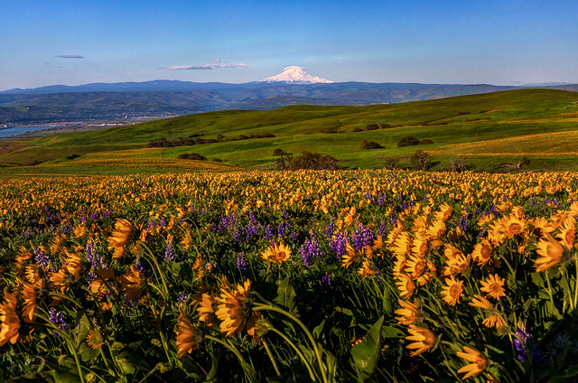 Dalles Mountain Ranch Mt Hood Spring View
