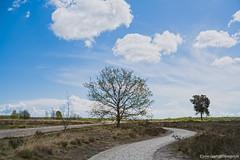Regte Heide (Moor)