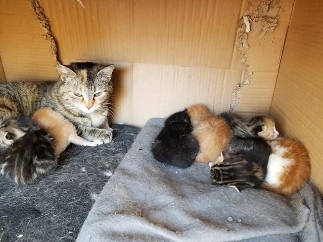 20190513.kittens.story.6