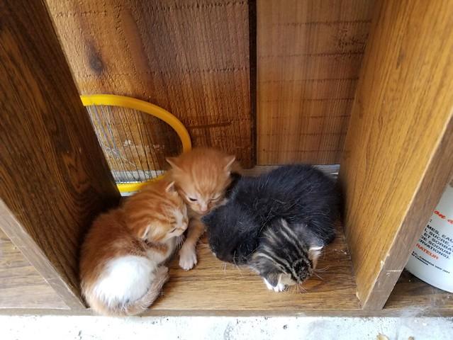 20190513.kittens.story.3