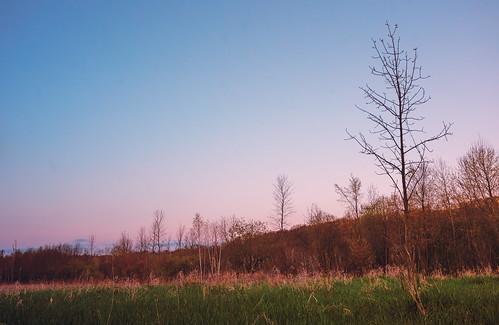 breakthroughphotographyx410stopnd minnesota wildriverstatepark spring statepark sunset trees northbranch unitedstatesofamerica