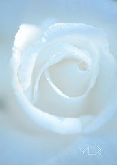 ... WHITE AGAINST WHITE ...