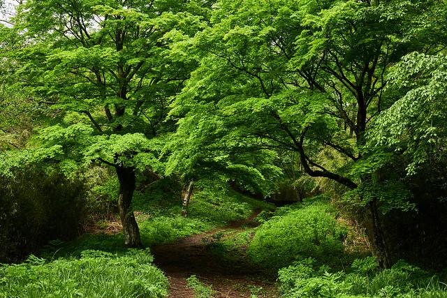 Spring green - 3