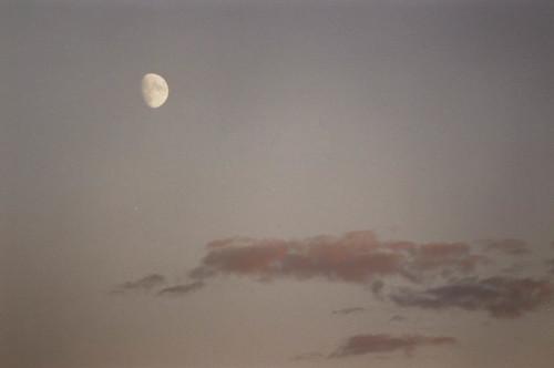 canada nb newbrunswick plumweseep moon