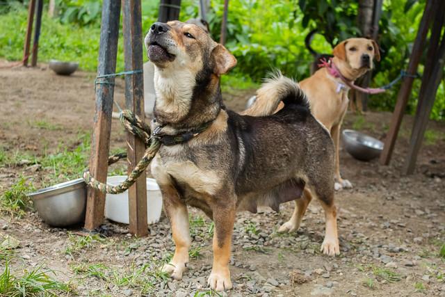 Huéspedes de la Unidad de Protección Animal