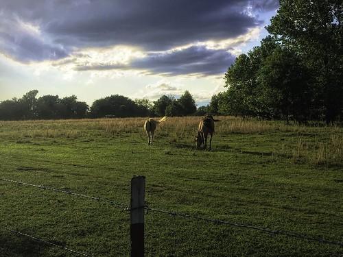 may2019 skywatch brokenarrow oklahoma horses topazstudio