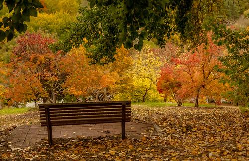 autumn seat relax inhale colours beauty mountloftybotanics southaustralia