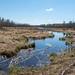 Elk Island Trail 11-102.jpg